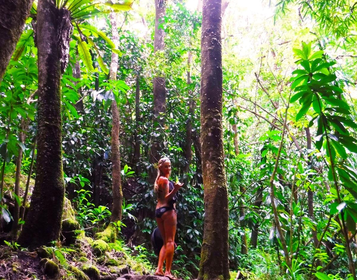 Aloha from thejungle